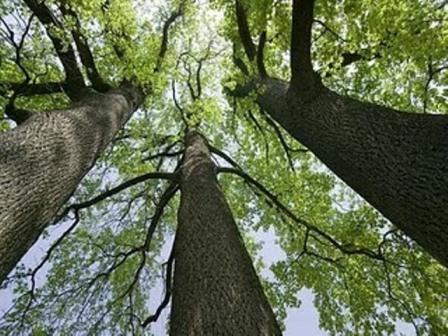 Reuniao - Tres Arvores Sonhadoras